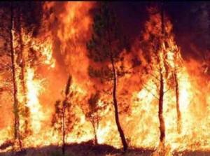 incendios31