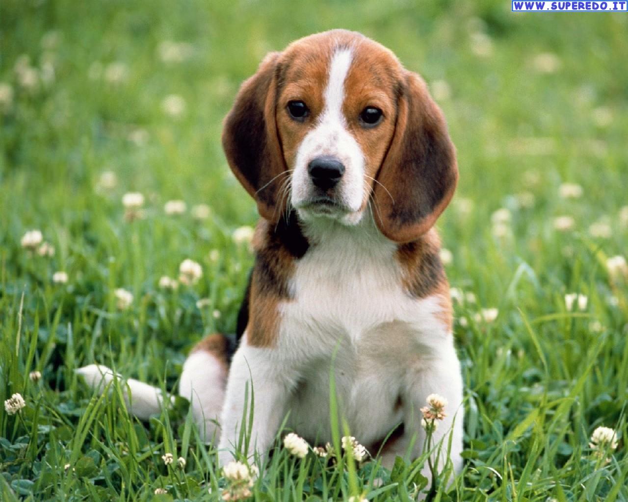 Incentivi per adozione cani