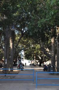 piazza pittore renda alcamo