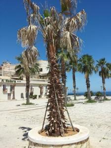 Palme Castellammare (2)