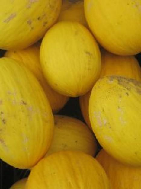 meloni-gialli_