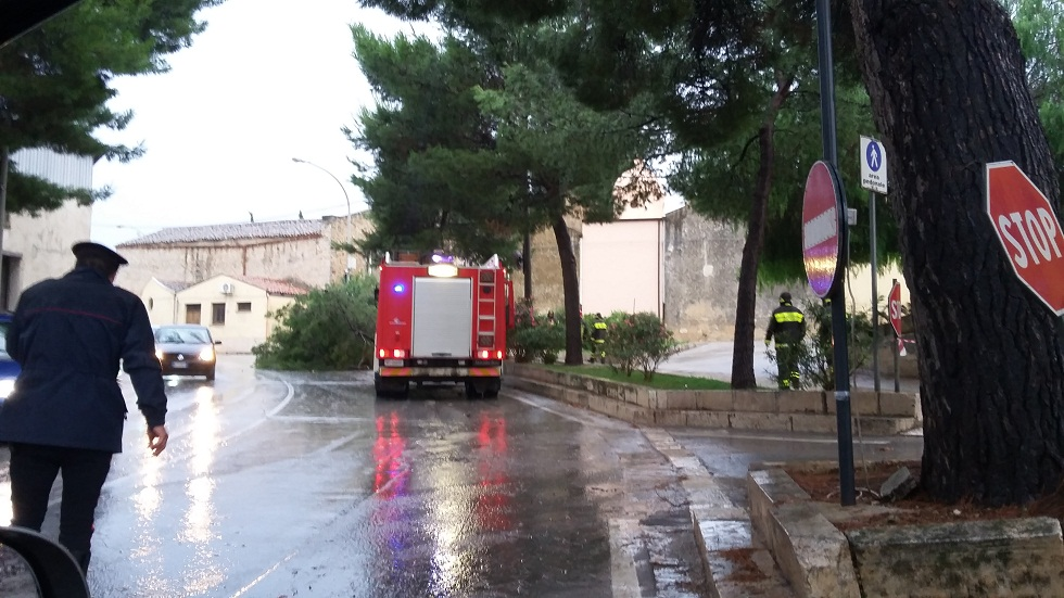 Caduta Albero Alcamo (3)