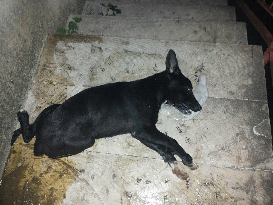 cane morto calatafimi