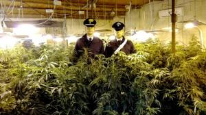 Carabinieri di Grisì Scoperta Piantagione di Cannabis