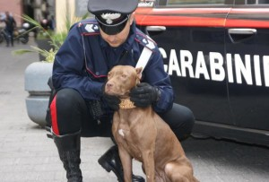 Carabinieri Matrattemento Animali