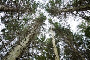 alberi_fronde