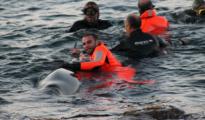 guardia-costier-4-delfini