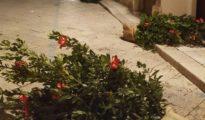 Corso Stretto alberi e vaso (3)