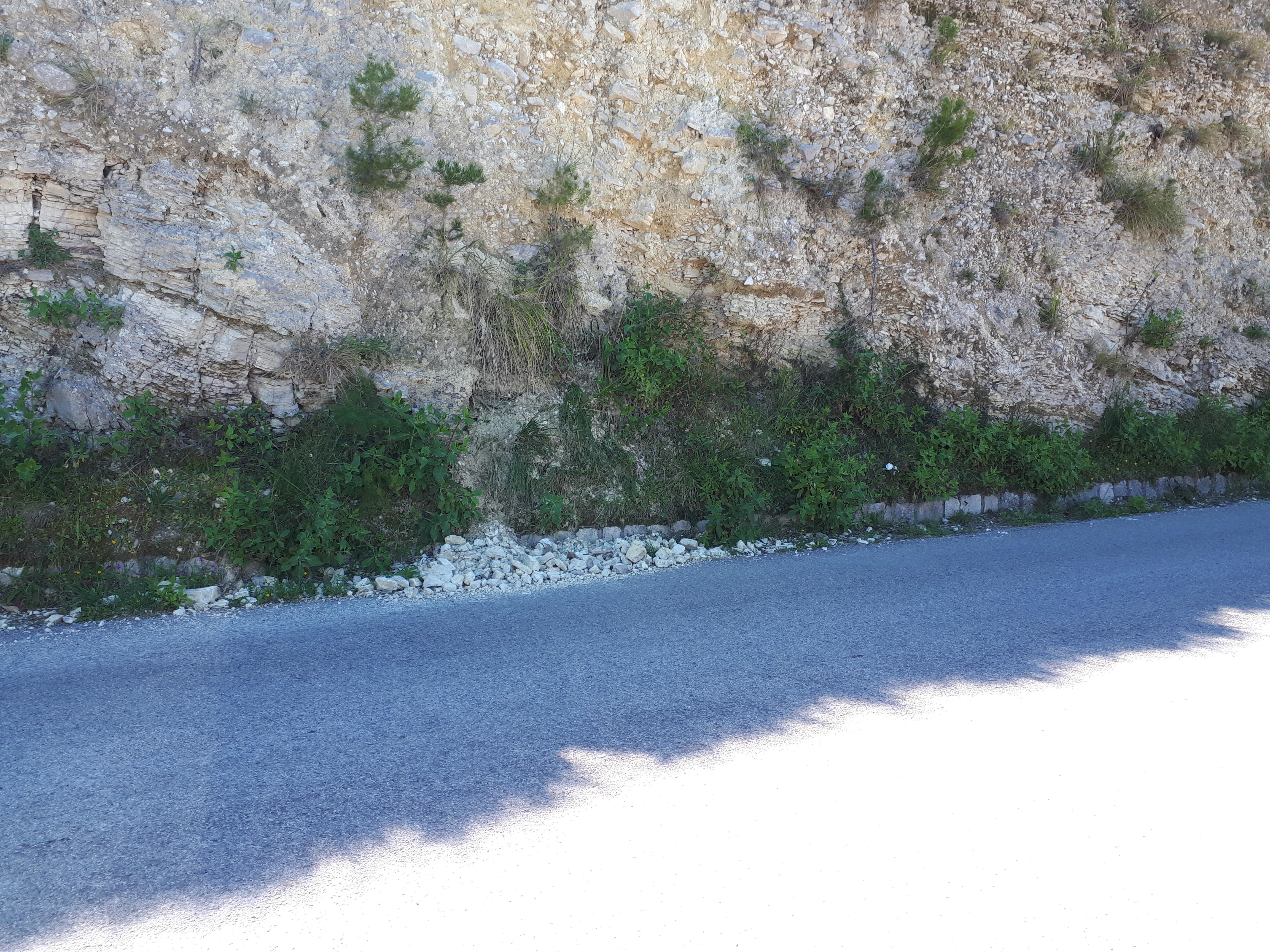 Monte Bonifato (4)