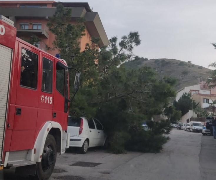 Alcamo: danneggiata un'auto per via di un albero caduto in strada - Alqamah